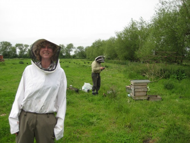 Tending to the bees on the farm