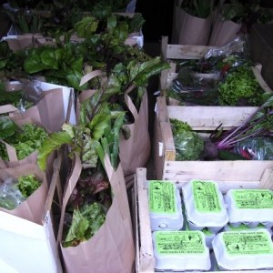 waterland organics veg bags