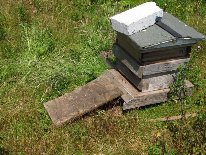 Hive now full of bees :-)