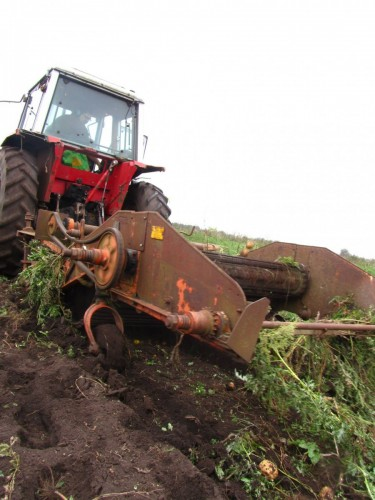 Potato harvester in action