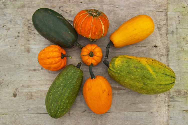 One of the best bits of this years harvest was this crazy group of squash, all arising from seed collected in 2013 from a squash that looked like the one in the centre - they saved the seeds as it was a curiosity at it hadn't grown true to type and kept really well over the winter months. we're waiting to see how well the offspring keep...