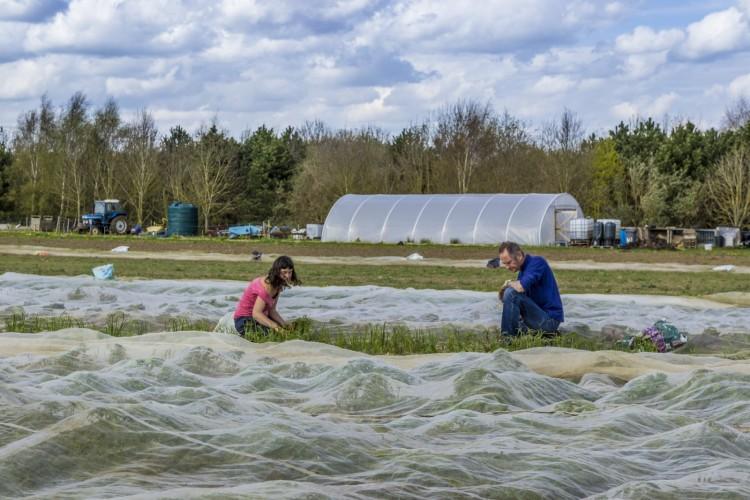 FarmShare volunteers in action