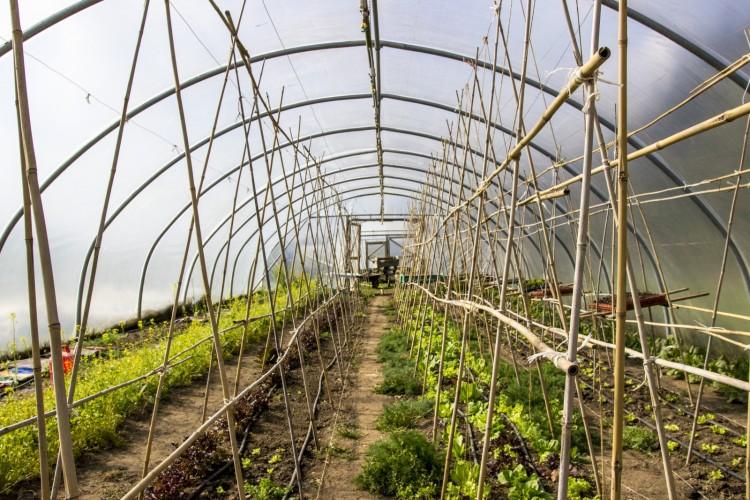 Salad crops needing protection from pesky rabbits