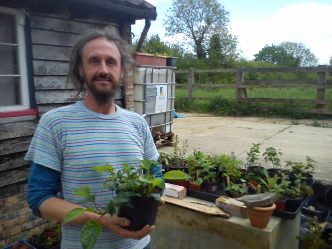 Lee with his creeping comfrey and other fantastic plants
