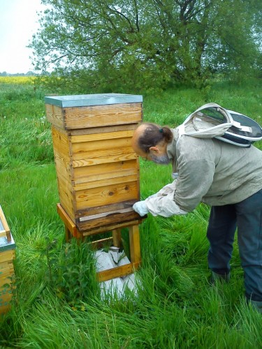 Rehomed national beehive on the farm