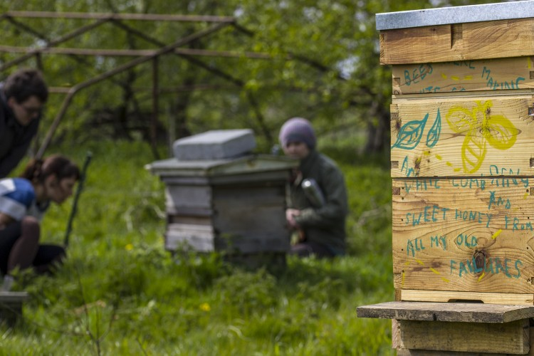 New hive  placed with the existing hives on the farm