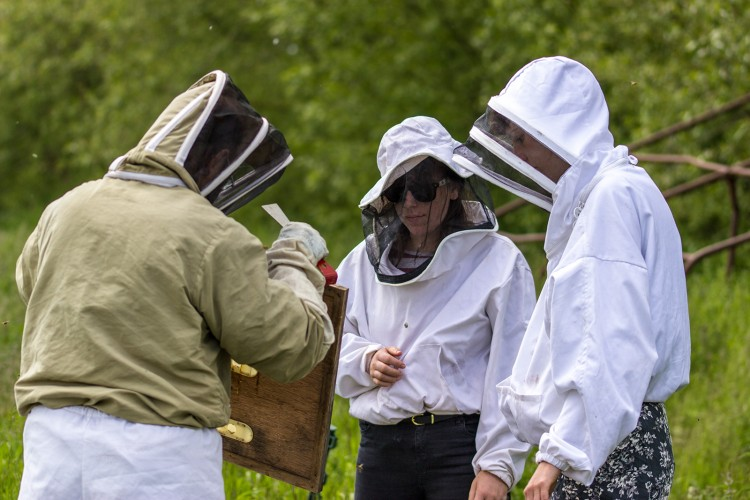 First hive inspection of the year