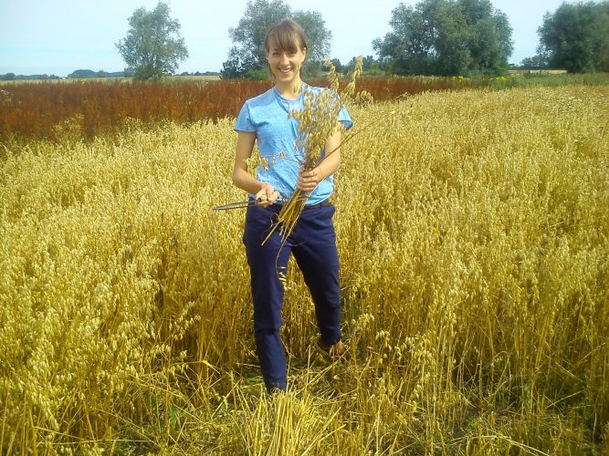 Melissa sickling our 2015 oats