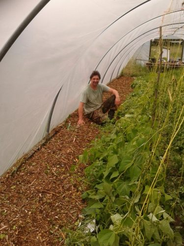 Mulched polytunnel path in June